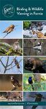 Birding & Wildlife Viewing in Fernie.